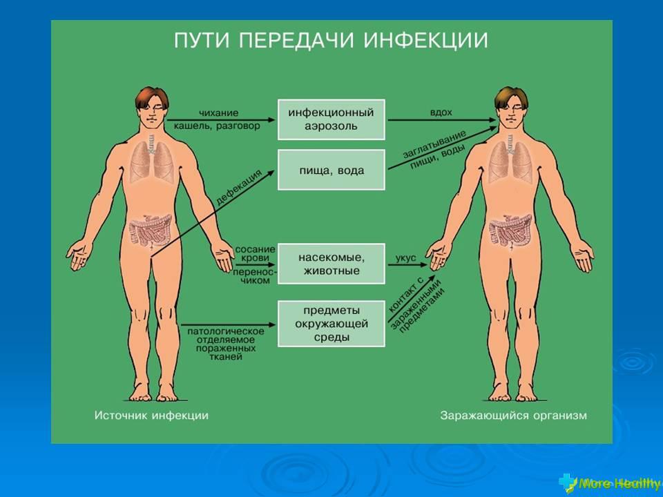профилактические препараты от паразитов в организме человека