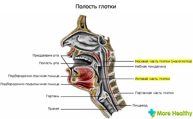 гомеопатические средства от паразитов человека