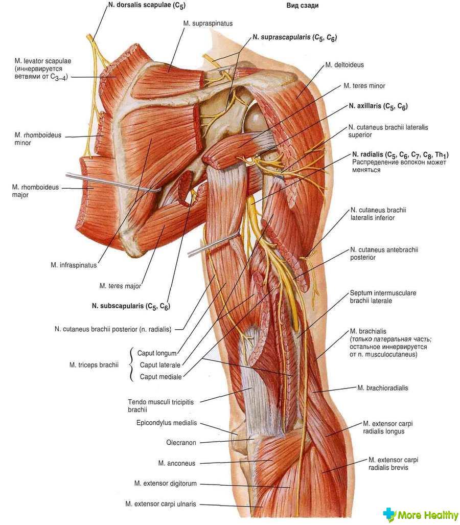 Травма плечевого сустава при падении ситенко м.и патологии и суставов