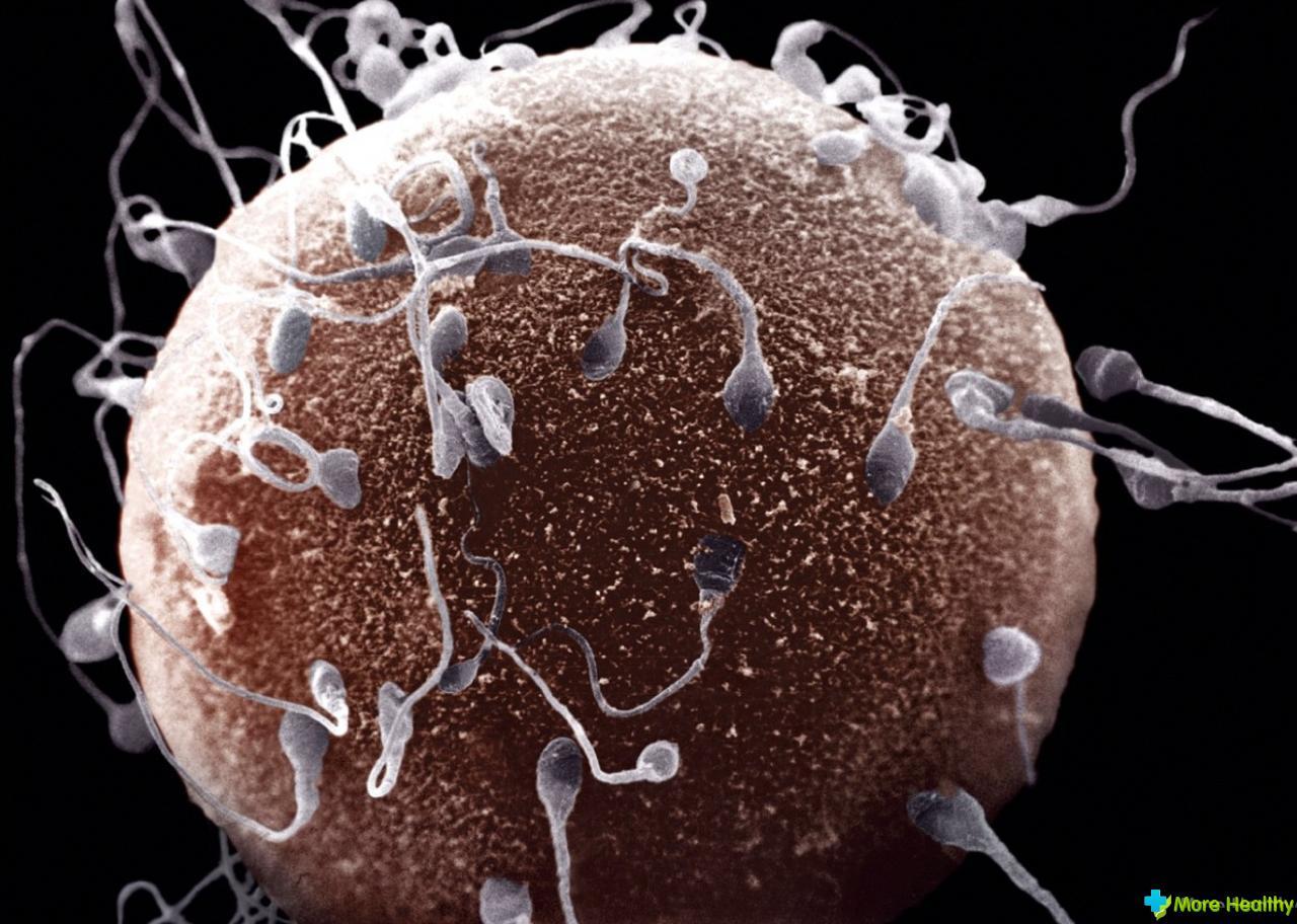 Чем питаться для сперма 2 фотография