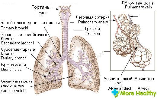 вопрс профилактика варикоза