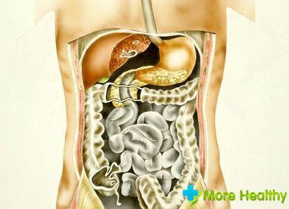 функции органов пищеварения