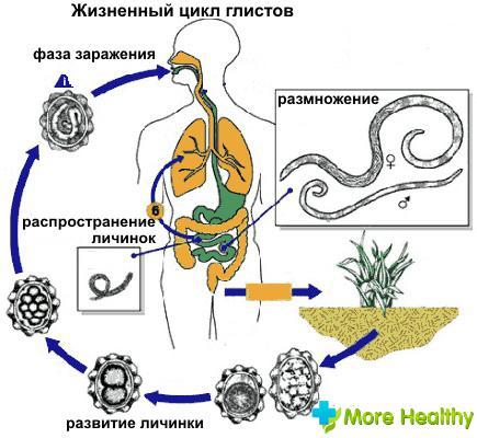 при лечении от паразитов может появиться тошнота