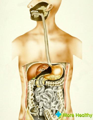 Анатомия человека на фото